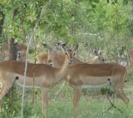 Un bon safari avec safarivo.com